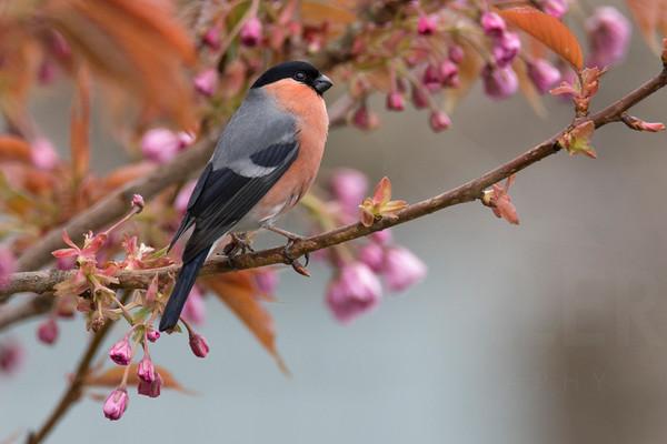 Nature: Little Birds
