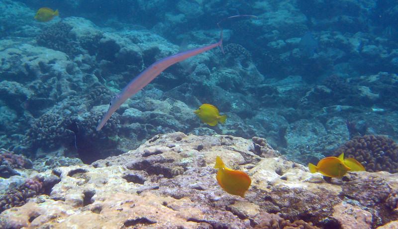 512- 20080416- Hawaii 20-Snorkelling IMG_0766.jpg