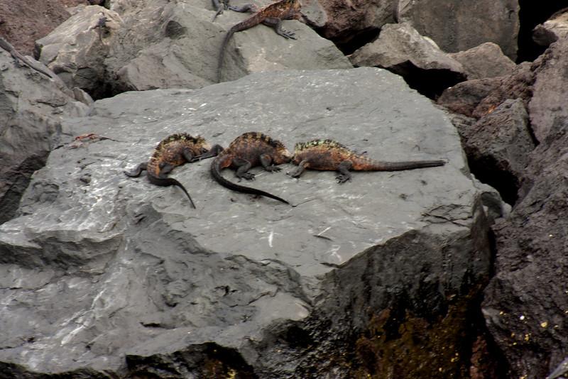 Three Way Fight : Journey into Genovesa Island in the Galapagos Archipelago