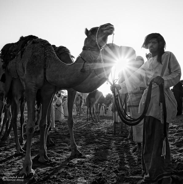 Camel Race  (27)BW (1)- B&W.jpg