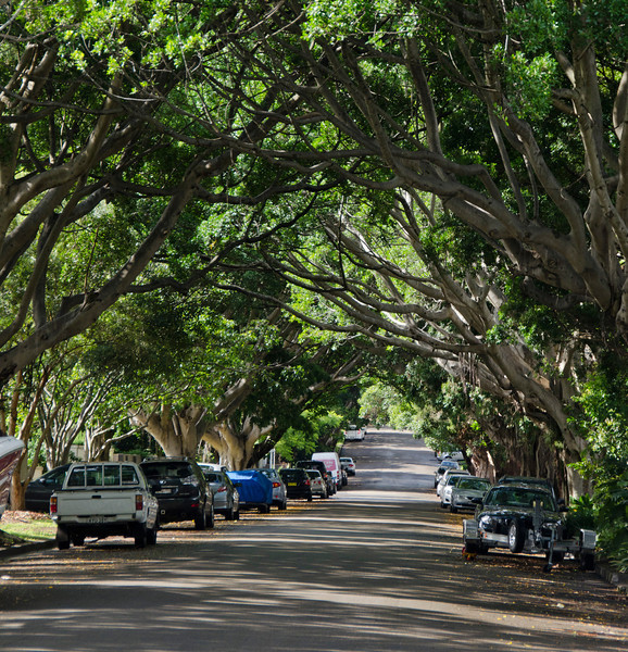 ...the tree lined streets (2)