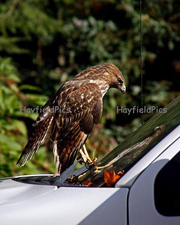 Hawks 3/14/11