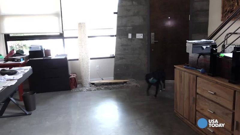 Dog Vacay bugged