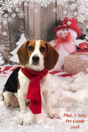 2018-2019 WHG Holiday/Winter Photoshoot