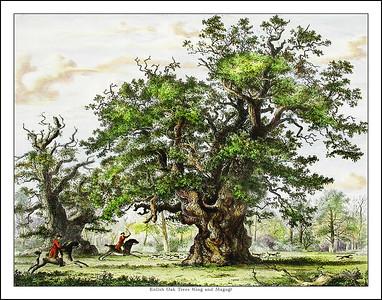 English Tree Prints