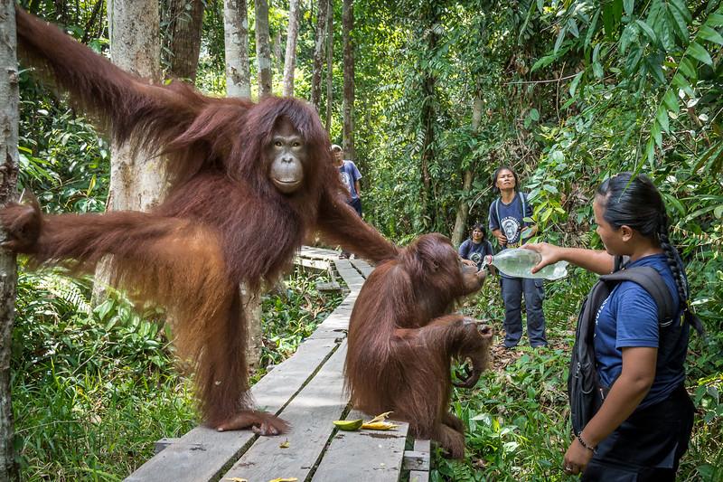 Borneo-2232.jpg