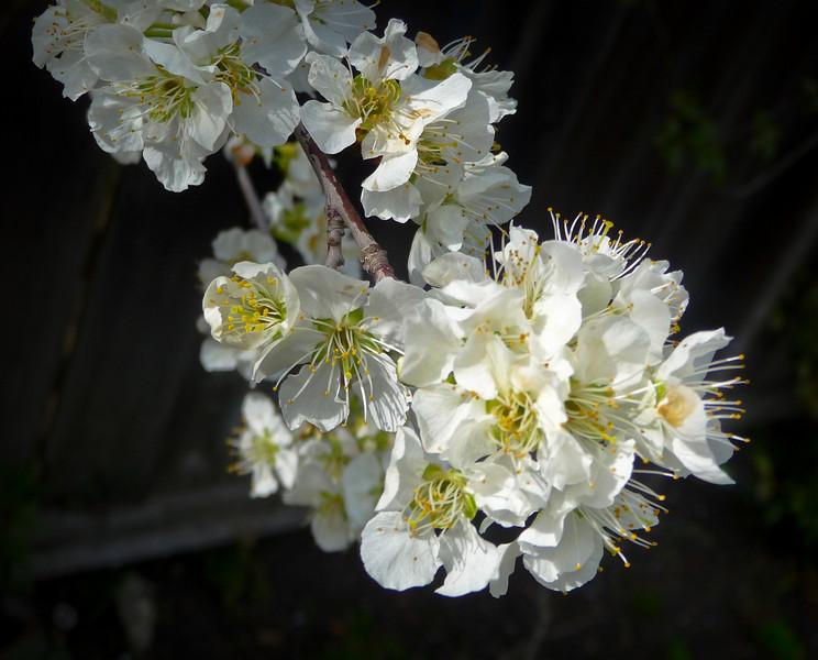 spring flowers-1000749-2.jpg