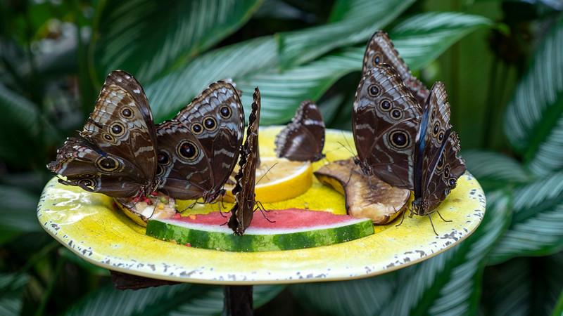 Florida-Keys-Key-West-Butterfly-Conservatory-01.jpg