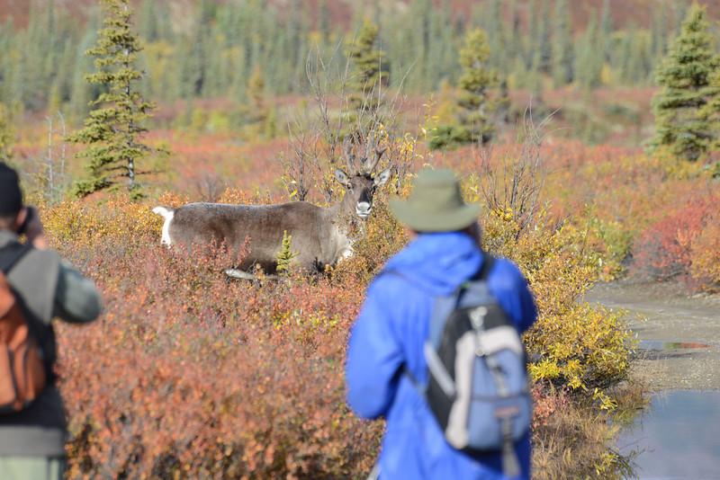 Alaska Fall 2013 - 183.jpg