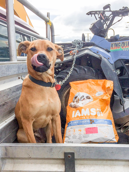 20170905 Ian with dog food - D'Urville trip IMG_3909.jpg