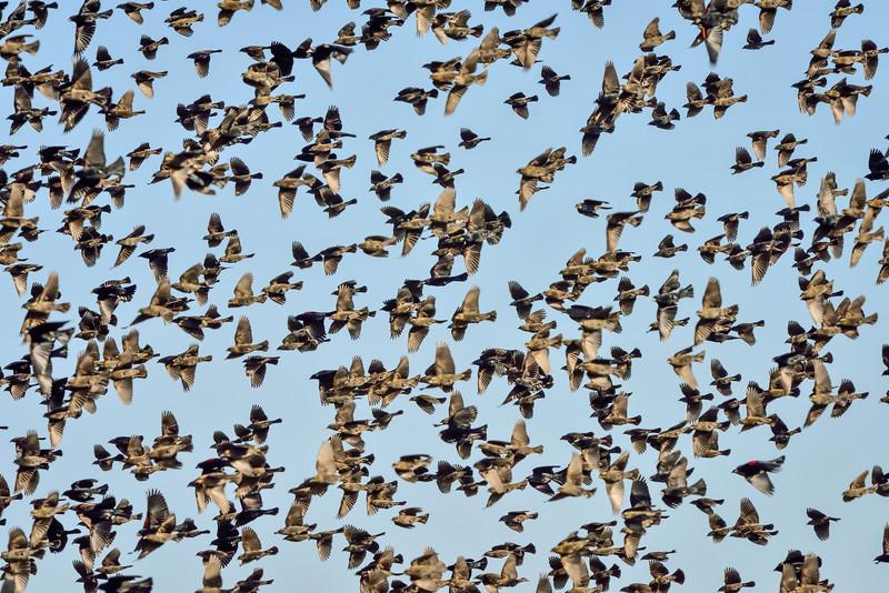 Merced National Wildlife Refuge, CA USA