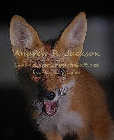 6-18-14 fox