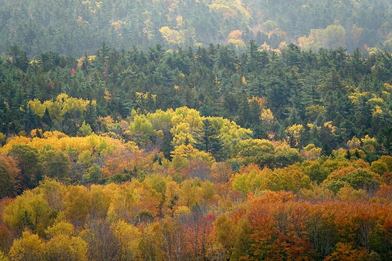 Autumn Trees, Blue Hill Maine 2018.jpg