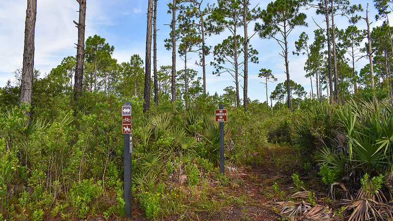 Signs pointing into pine flatwoods