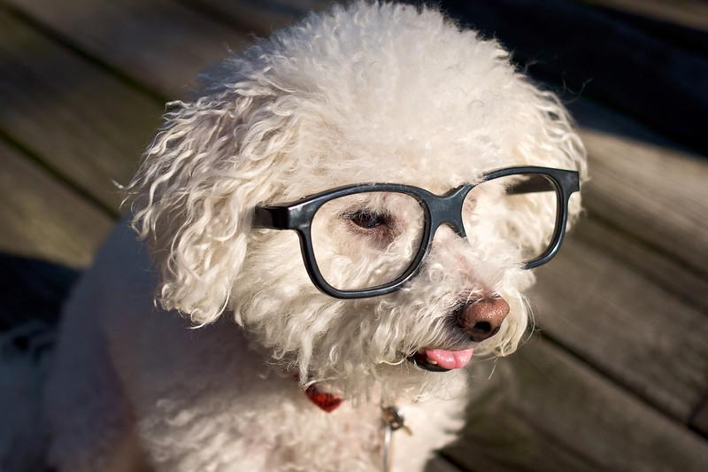 ProfessorPuppies-457067659-O.jpg