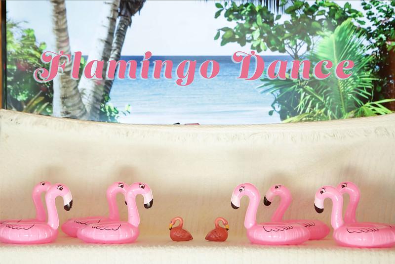 Flamingos.mp4