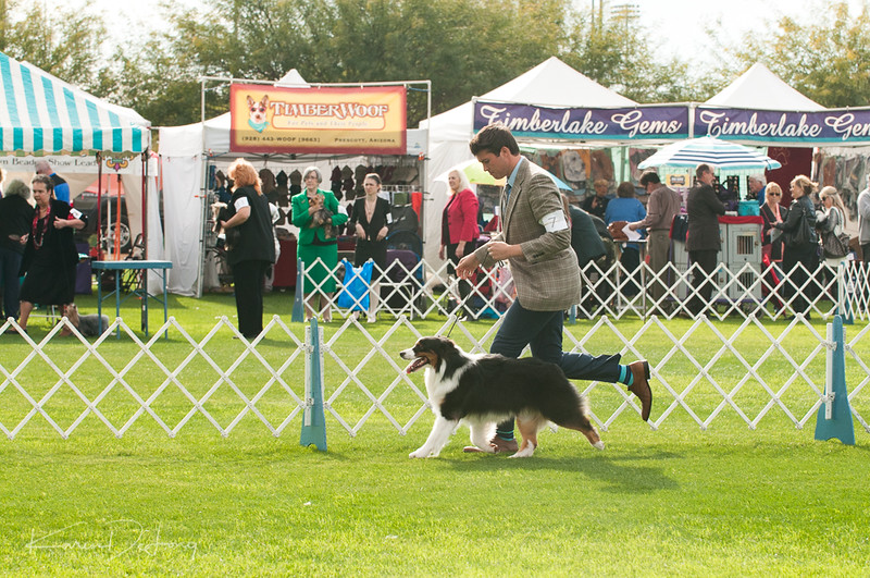 20170114_Kachina Kennel Club_Aussies-32.jpg