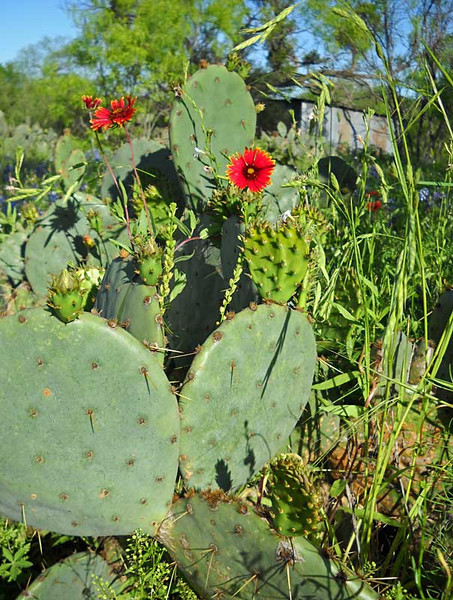 Red-and-cactus.jpg