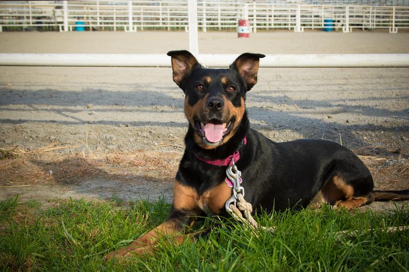 Stephanie Runion doggie-6.jpg