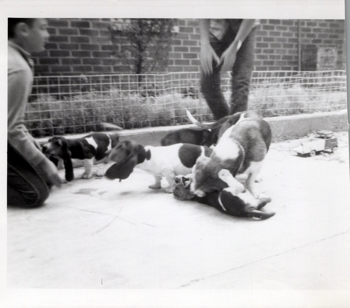 1964 Josephine's puppies.jpeg