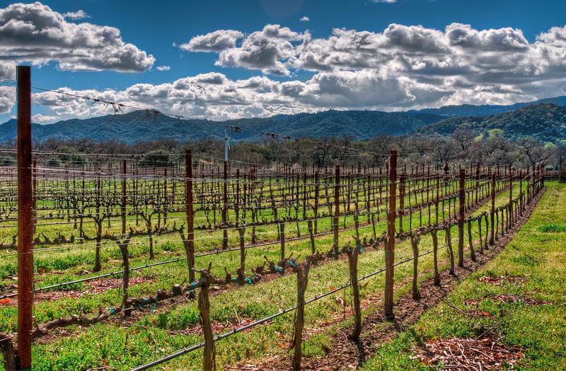 Napa Wine (2011-02-26)