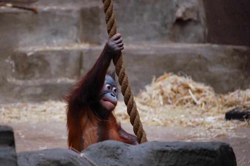 Arnhem_Burgers Zoo-20.jpg