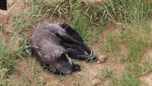 Wild Animal Sanctuary-June 2017