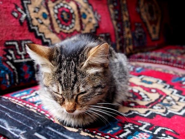 catshishaplace.jpg
