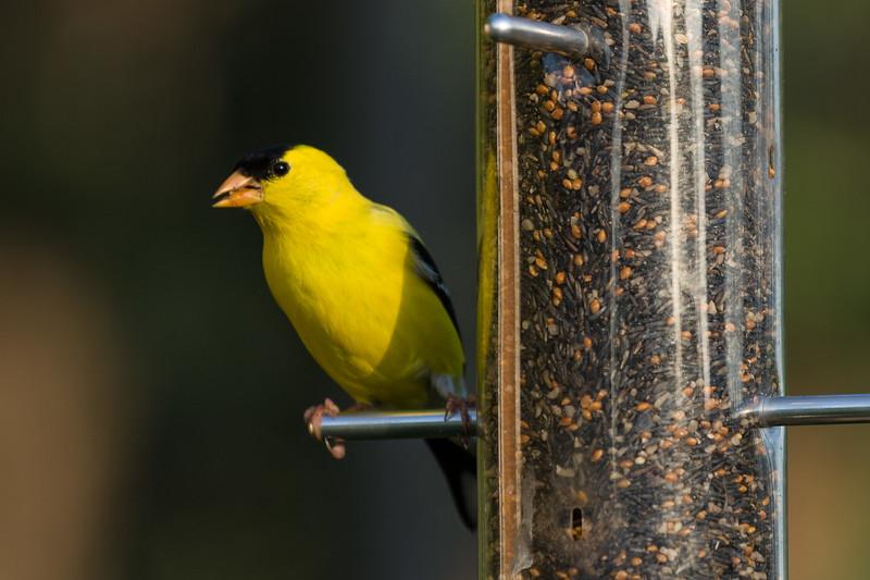 1106_birds_087.jpg