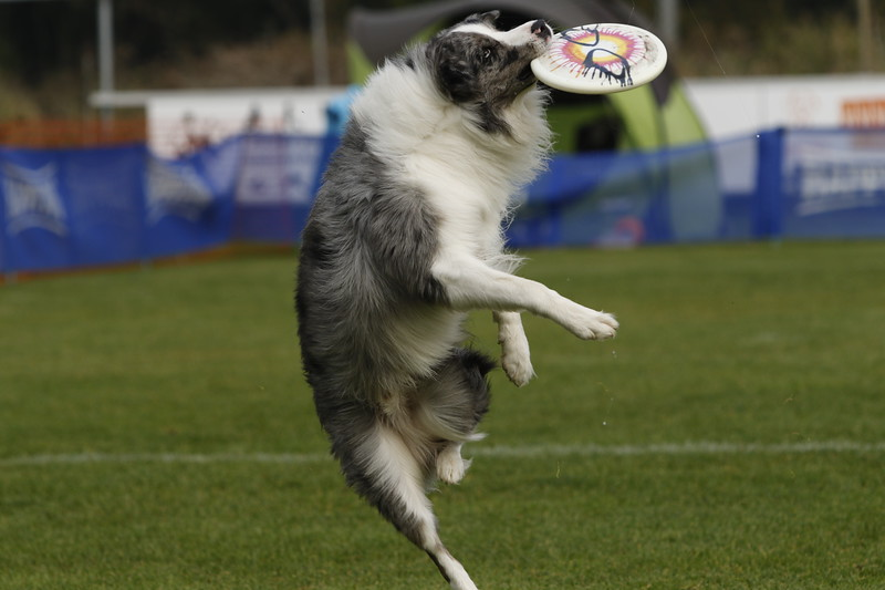 Dutch Open Frisbee - 21 oktober 2018 - KC Delft