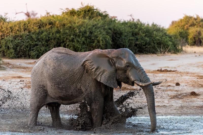 Botswana_June_2017 (4248 of 6179).jpg