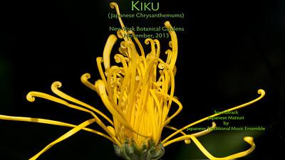 KIKU-2013-NYBG