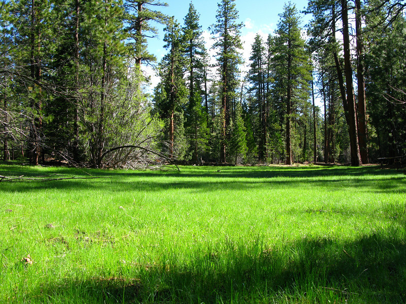 Jerkey Meadow