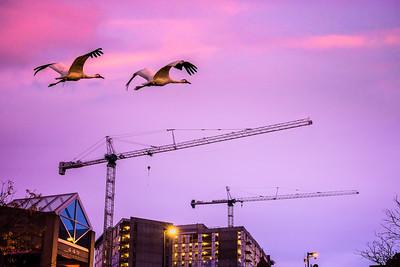 Crane Images