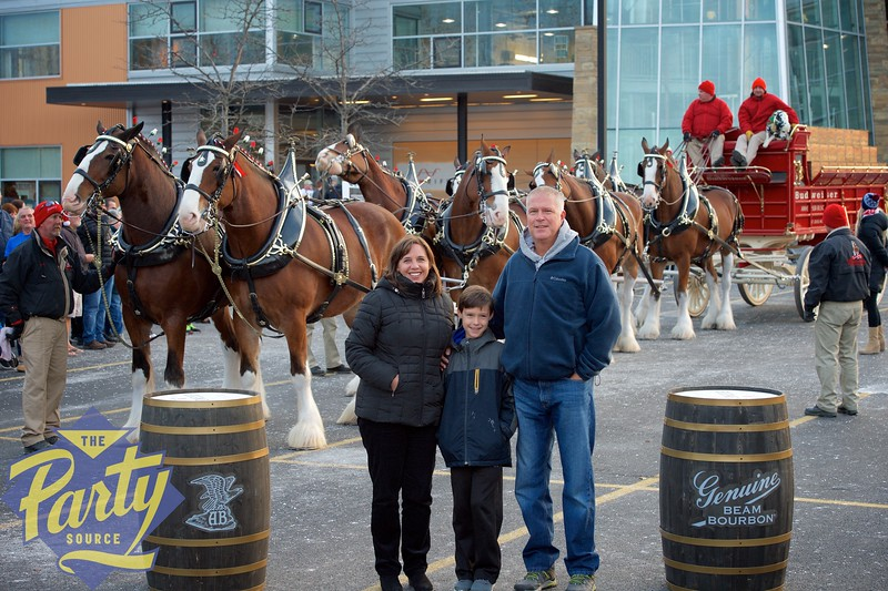 Clydesdale Portraits 269.jpg