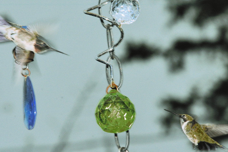 2 HUMMING BIRDS.jpg