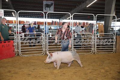 PLSR 2019 Livestock Show