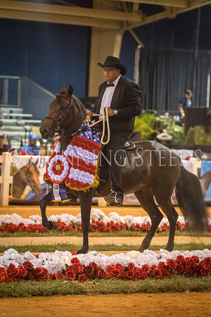 315-Performance Mares and Fillies Championship