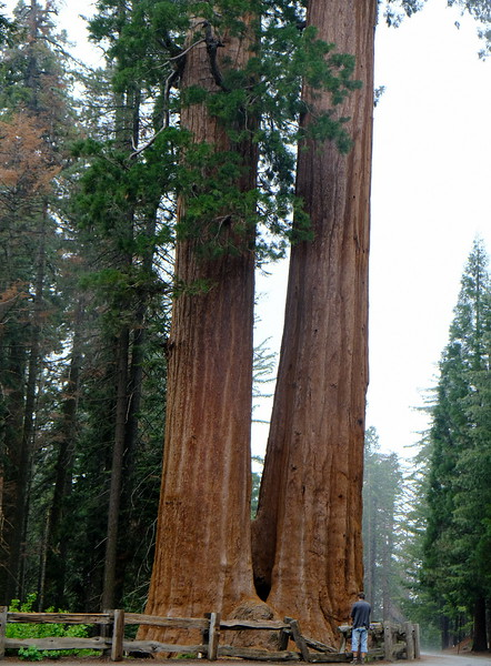 California Day 6 Sequoia 05-30-2017 144.JPG