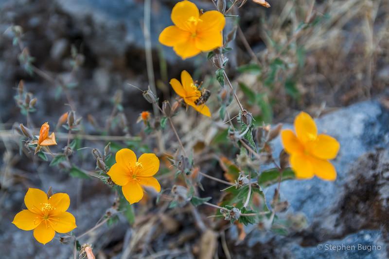 Colca Canyon-1319.jpg