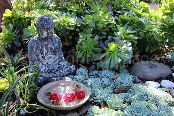 Buddha's Samadhi