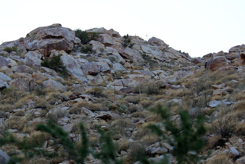 05 Cougar Canyon (147).JPG