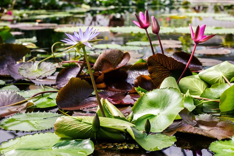 2016-06-10_Botanical_Garden_017.jpg