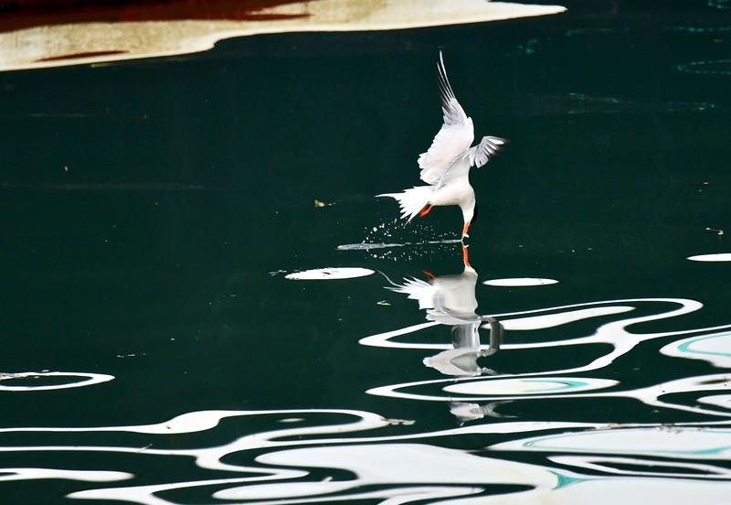 Tern Poetry.jpg