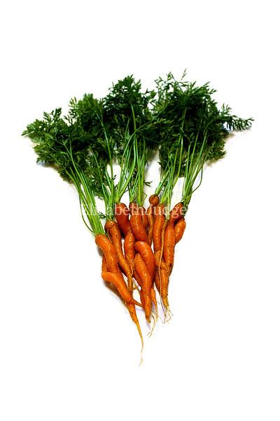 Carrots  6/1/2013