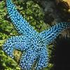 light blue spot star