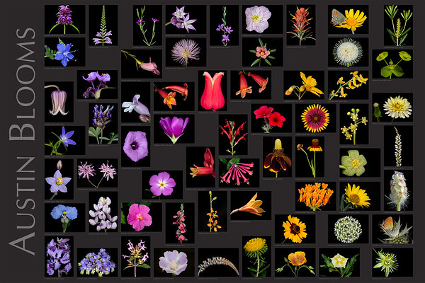 Texas Botanicals Gallery
