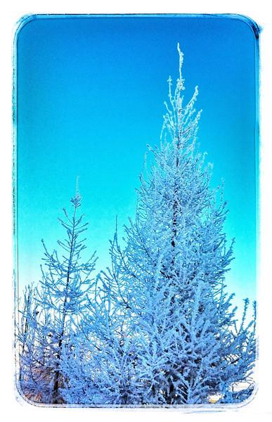 Hoar frost in Edmonton.