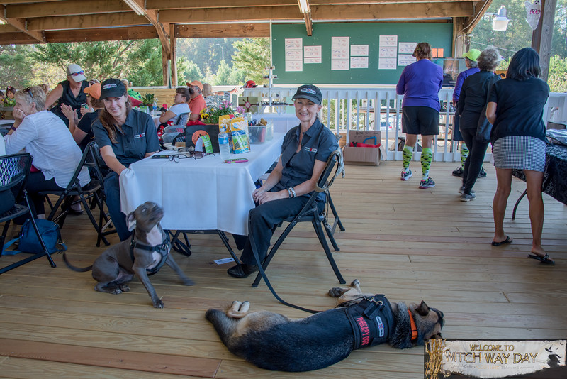 _TD57532WitchWayDay-Wags4Tags-Greg-Large.jpg