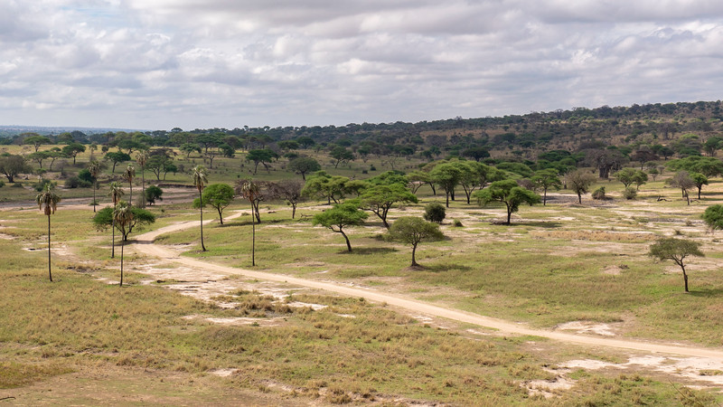 Tanzania-Tarangire-National-Park-Safari-10.jpg